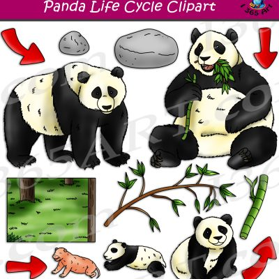 Panda Life Cycle Clipart