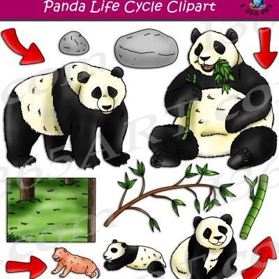 Panda Life Cycle Clipart
