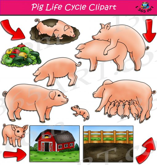 Pig Life Cycle Clipart