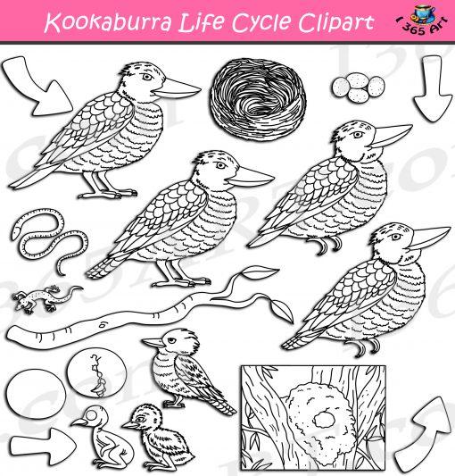 Kookaburra Life Cycle Clipart