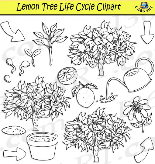 Lemon tree life cycle clipart