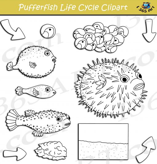 Puffer Fish Life Cycle Clipart
